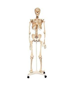 Научный игровой набор Edu-Toys Скелет человека
